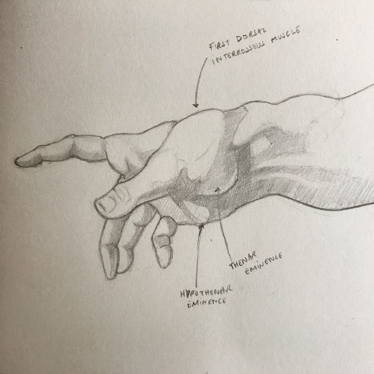Sinead Lawless - #art #anatomy #hand #sketch #creationofadam #god