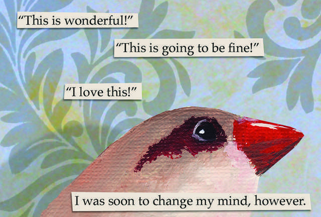 The Mincing Mockingbird Guide To Troubled Birds Troubled Birds Bird Memes Mincing Mockingbird
