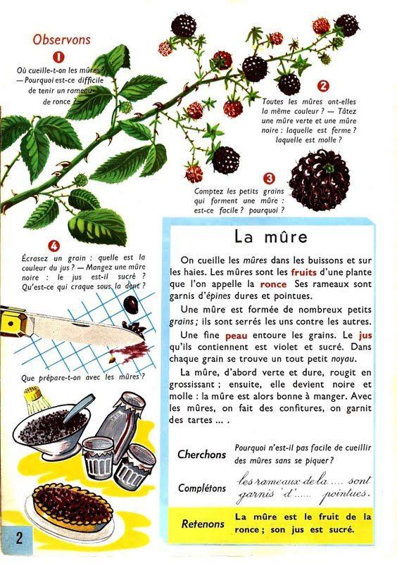 Leçons de choses: La mûre, fruit de la ronce