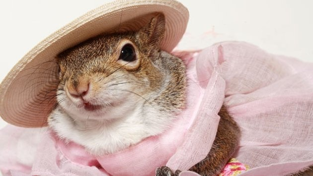 I hope all of you saw Sugar Bush Squirrel on Good Morning America today....if you missed it, here is the slideshow from their web site...They did a GREAT JOB!!! Good Morning America spotlights our very own Sugar Bush Squirrel....check it out!