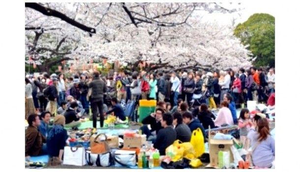 Hanami Matsuri: Festival das flores de cerejeira – Mundo-Nipo
