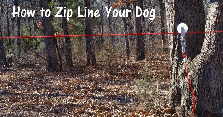 A dog zip line may be the most economical and humane way to safely allow your dog some space in the yard. I chose this for my dog and thought I would share how it works. This DIY project is quick and inexpensive. A cheap solution that could save your dog's life.