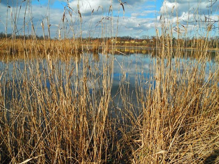 Výlety a procházky: Kolem Počernického rybníka