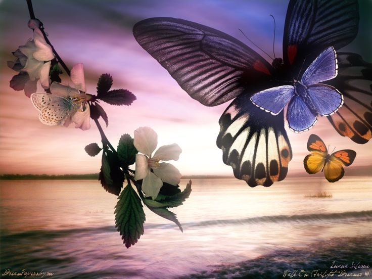 Butterflies And Lake Wallpaper