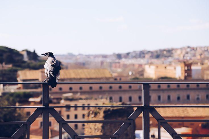 Roman Forum & Palatine Hill: The Highlights Reel
