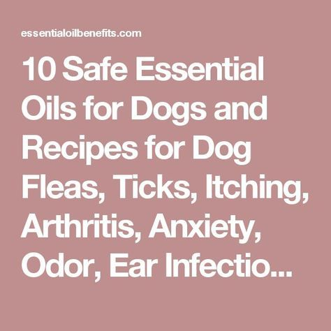 10 Safe Essential Oils for Dogs and Recipes for Dog Fleas, Ticks, Itching, Arthritis, Anxiety, Odor, Ear Infections and Better Health