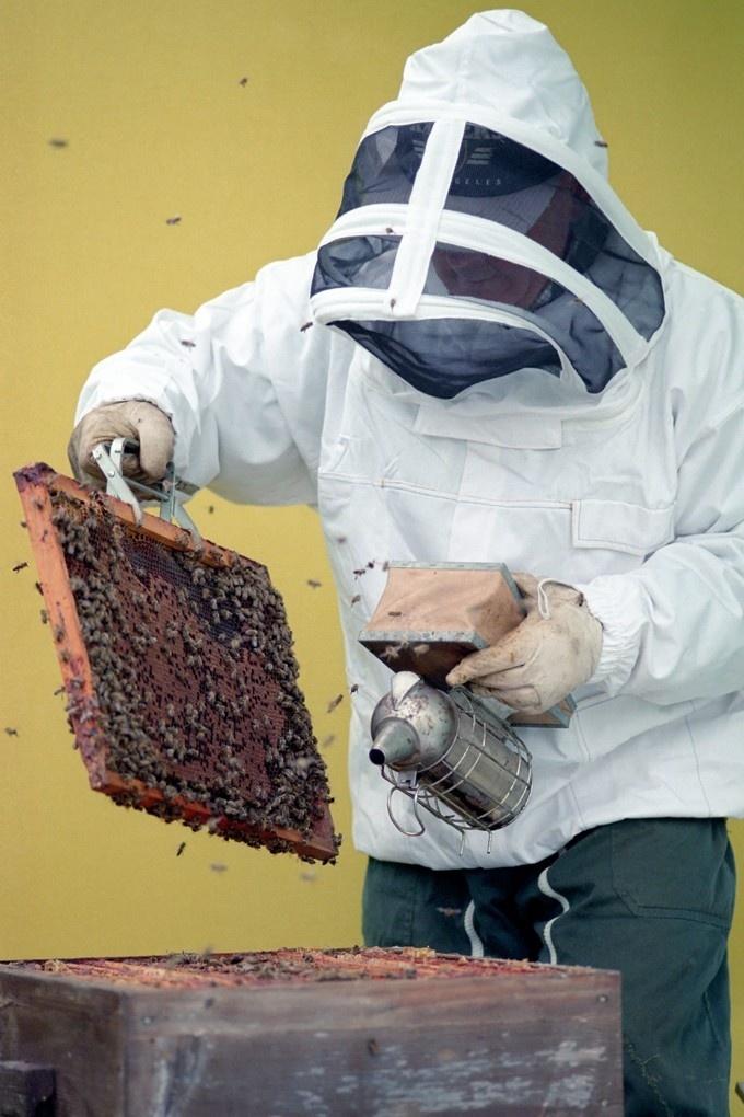 Maison du miel et des abeilles du val dunois.