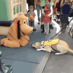 Service Dog Meets Disney's Pluto And Has The Best Reaction Ever