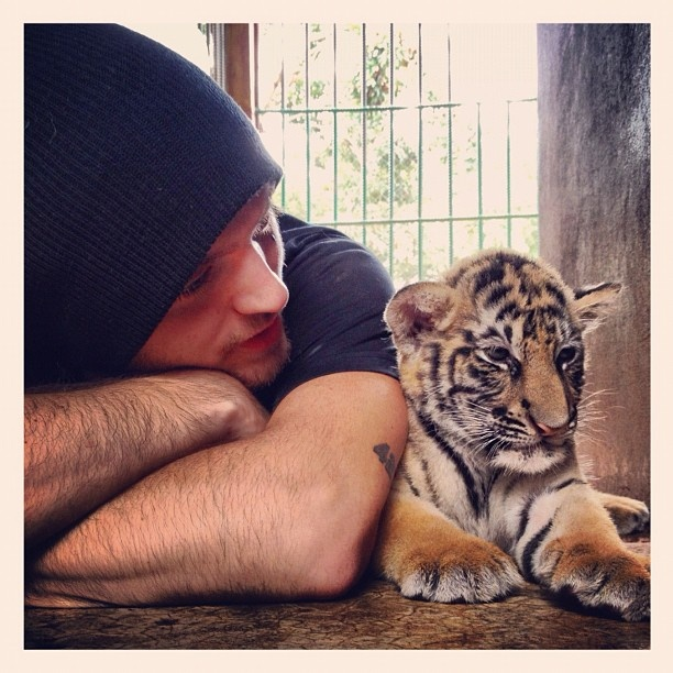 Alex DeLeon from The Cab and a baby tiger. I'm through.