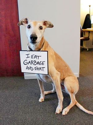 Hilarious post from Dog Shaming Blog