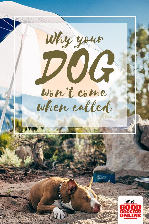 This Is Why Your Dog Won T Come When Called Dog Training Teach