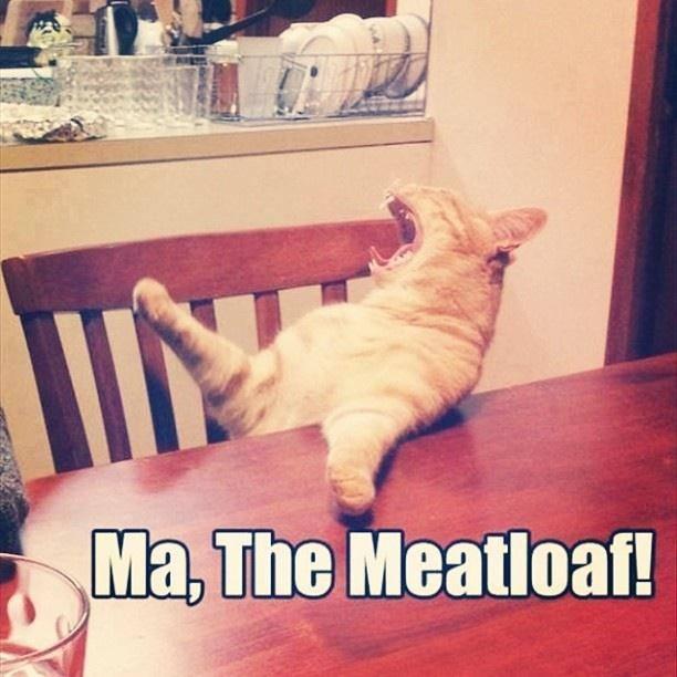 Italian kitty!!!