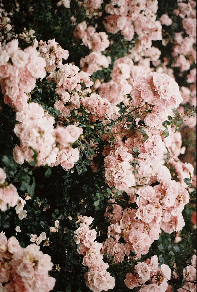 Si te gustan las rosas y estás en Buenos Aires, hasta fin de mes podes pasar por el Rosedal de Palermo y llevate un gajito y/o rosas gratis!!!  Mas info en: www.buenosaires.gob.ar/noticias/los-portenos-estan-invitados-llevarse-unas-rosas-del-rosedal #lamadreselva Foto por: joyfelicityjane.tumblr.com/post/29905149721