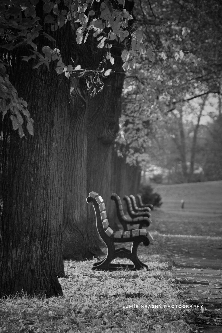 Osamělé lavičky v parku Foto: k.lumir@seznam.cz