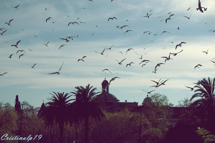 Parc de la Ciutadella #Barcelona #Spain #Espana #Pajaros #Cielo