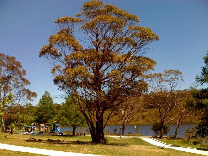 Wentworth Falls Lake, Blue Mountains NSW