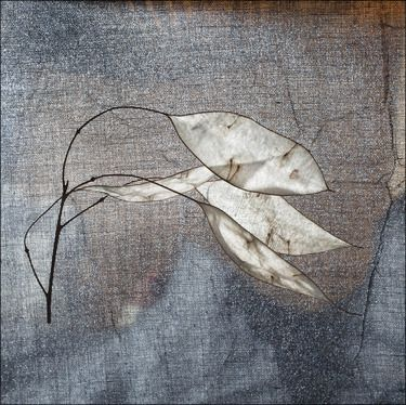 Check out this great piece of art on Saatchi Online. leaves2-limited edition of 10 prints by Maja Hrnjak