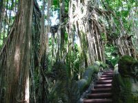 Ubud Monkey Forest, Place of interest in Bali