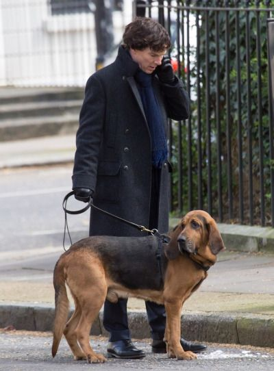 On set, with hound, for Sherlock season 4.