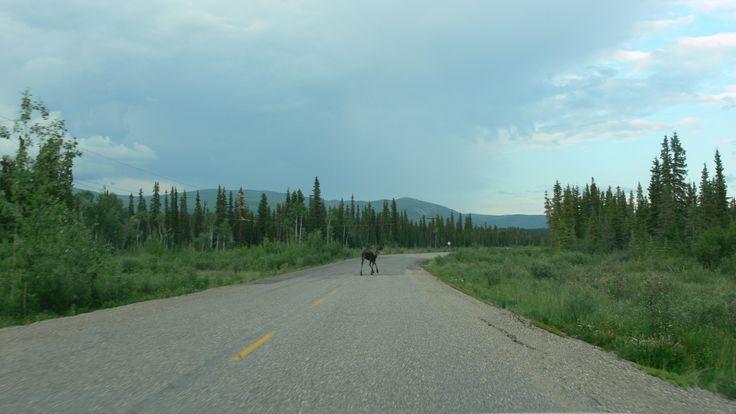 on the way to Whitehorse...