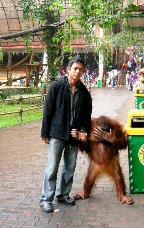 Even orangutan is shame to be in the same frame with you!