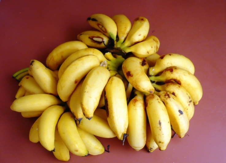 guineo nino child banana that is the way called in pr