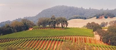 Sonoma Valley, California. One of the most beautiful places on earth, and an area I will always call home.