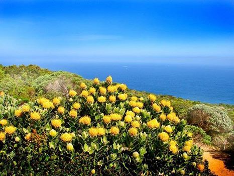 Got the day off and want to do something different! May we suggest a mid-morning breakfast followed by a drive up towards Melkbosstrand to see the Spring Flower display.