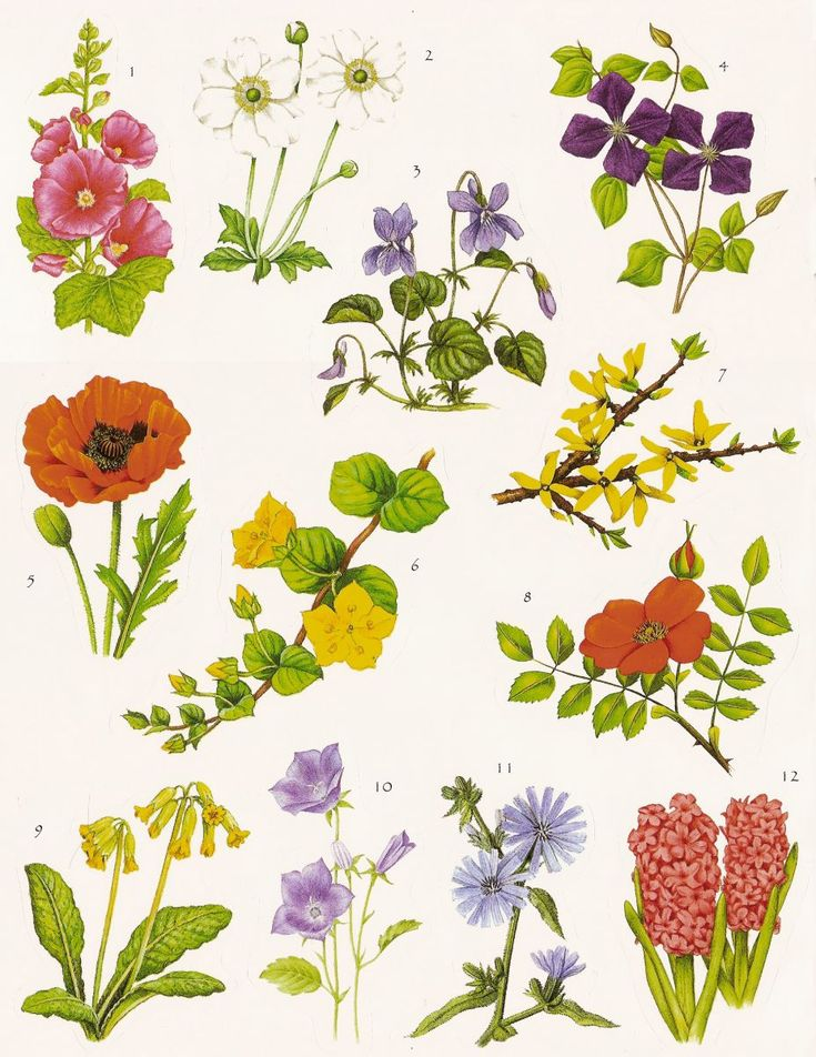 Symbolic meaning of flowers -- for a wedding, garden party idea, or even painted kitchen titles