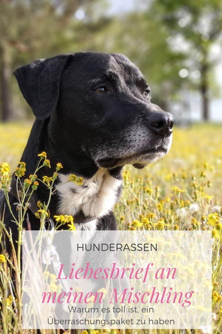 Ein Liebesbrief An Mischlinge Hunderassen Hunde