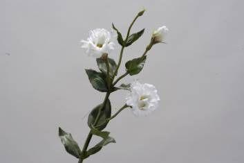 mooie lisianthus, leuk om te combineren met groene hortensia's en mimoso en eventueel met kleine bloesemtakjes.