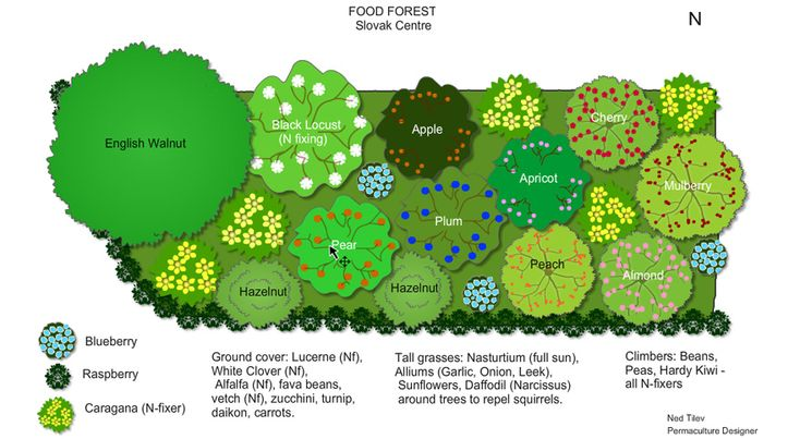 """Slovak Centre Food Forest Design- seems like it has a """"one of everything"""" approach. meh.still, nice for reference."""