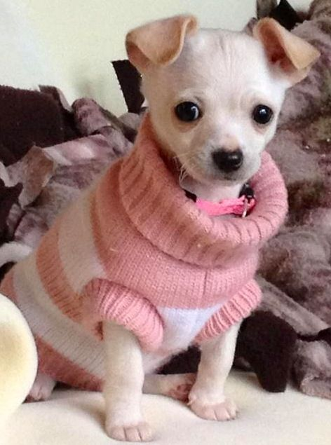Kleider fur mini chihuahua