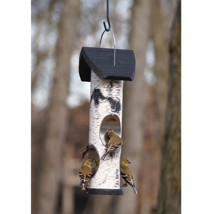 For $58.99 with Free Shipping! Titmouses will flock to this Birch Log Nyjer Seed Tube squirrel proof bird feeder. Made in the USA. Hang bird feeders outdoors.