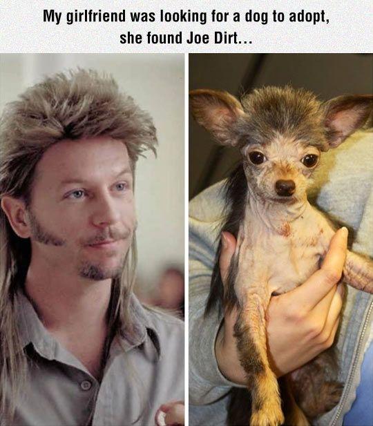 Joe Dirt's Dog