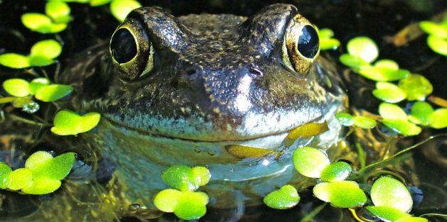 http://freshwaterhabitats.org.uk/