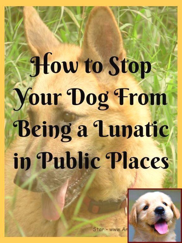 Dog Behavior Running In Circles And Dog Behavior Modification Jacksonville Fl Dog Training Books House Training Puppies Dog Behavior Problems