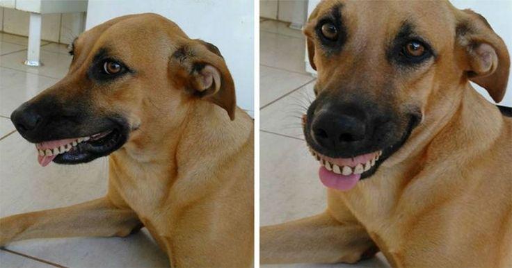 Ιδιοκτήτης πέθανε από τα γέλια όταν έμαθε ότι ο σκύλος του «απέκτησε» τα νέα δόντια του Crazynews.gr