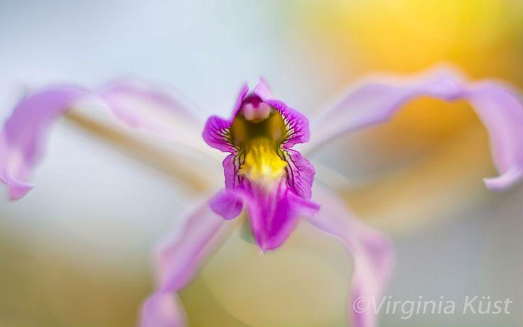 Den lilla världen #photography #fotografi #blommor