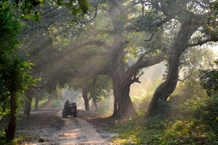 Jim Corbett National Park, which is a part of the larger Corbett Tiger Reserve, a Project Tiger Reserve lies in the Nainital district of Uttarakhand, India.