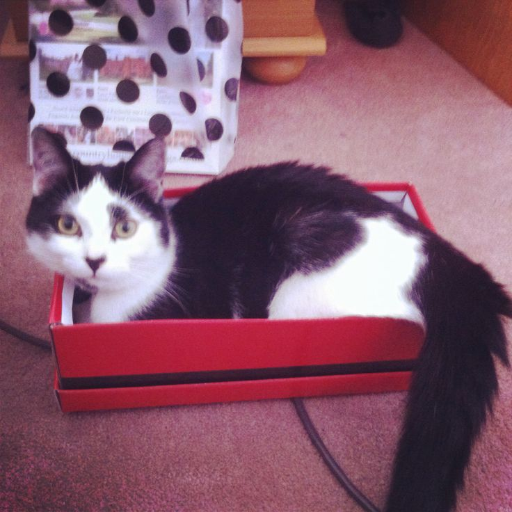 #100happydays day 58 - cats <3 boxes