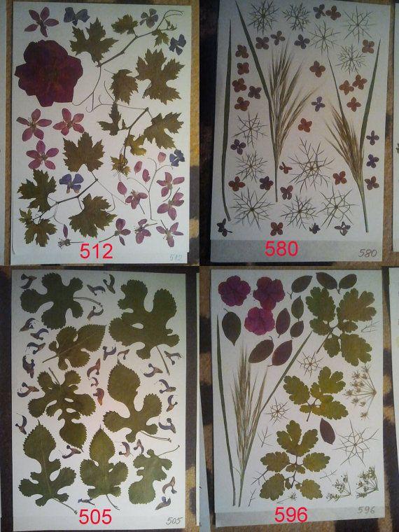 Pressed flowers / oshibana assortment 512 by PressedFlowersGarden