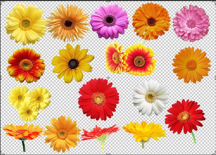 17 Free Daisy Flower Clip Art Transparent Images In Png Format Flower Clipart Daisy Image Flower Clip