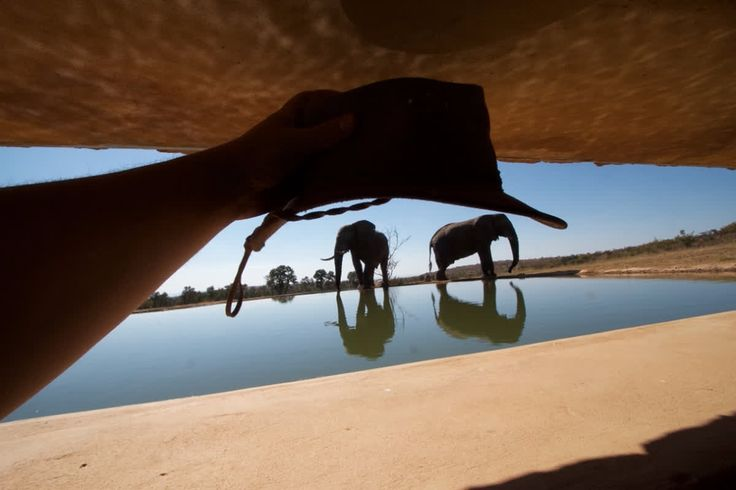At Mhondoro you have the unique opportunity to have an eye-to-eye encounter with wildlife fromour underground waterhole hide. Read more about the hide: www.mhondoro.com/experiences/waterhole-hide.