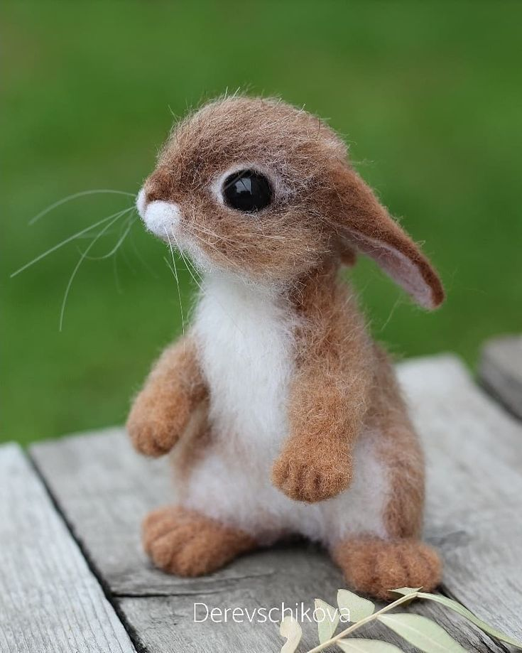 Baby Janie the Little Rabbit is domesticated and very affectionate. Sold. #rabbit #feltingwool #felting #pets #animals