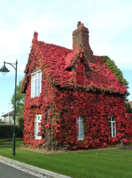 Cottage with Blood Red Boston Ivy Dartmouth Park Sandwell England..... Relax with this nature photo. #Relax more with this #free #music with #BinauralBeats that can #heal you. #landscaping #LandscapingIdeas #landscapeDesign