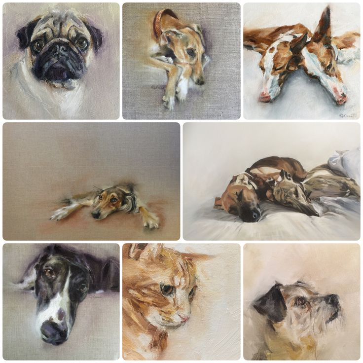Commissions available www.juliebrunn.co.uk #petportraits #dogart