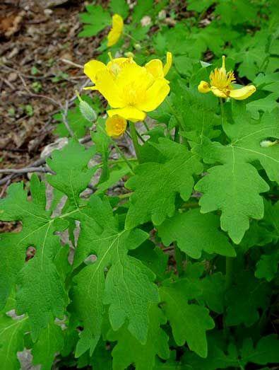 100 best images about moist garden on pinterest gardens for Perennial wood