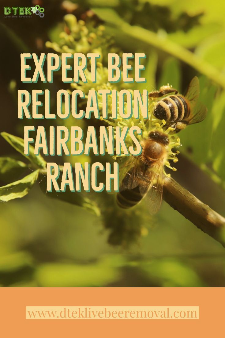 Are You In Need Of Bee Removal In Fairbanks Ranch Look No Further Than D Tek Live Bee Removal For All Your Bee Hive Removal Solu Bee Removal Bee How To Remove