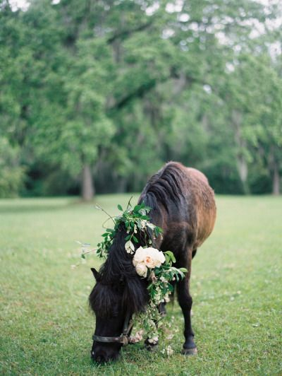 Flower Crown for your pony